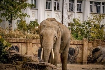 Zoo Leipzig Elefant