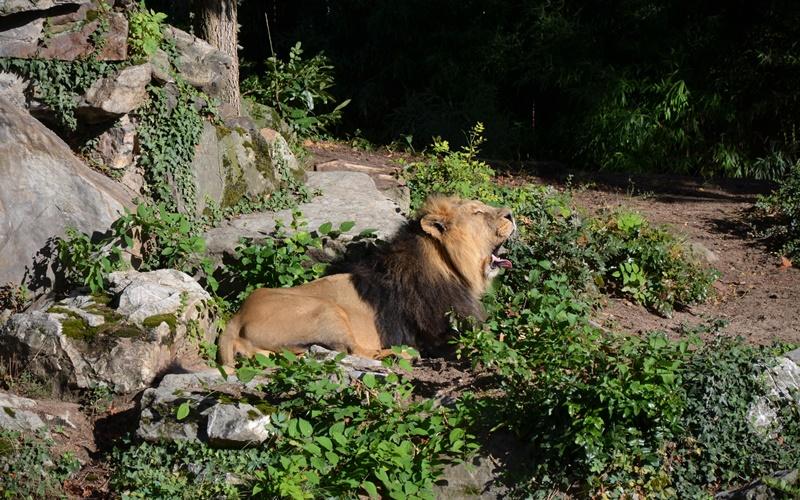 artenschutz zoo frankfurt