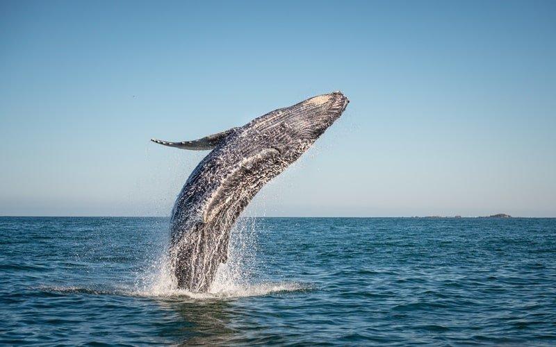Whale Foundation Teneriffa