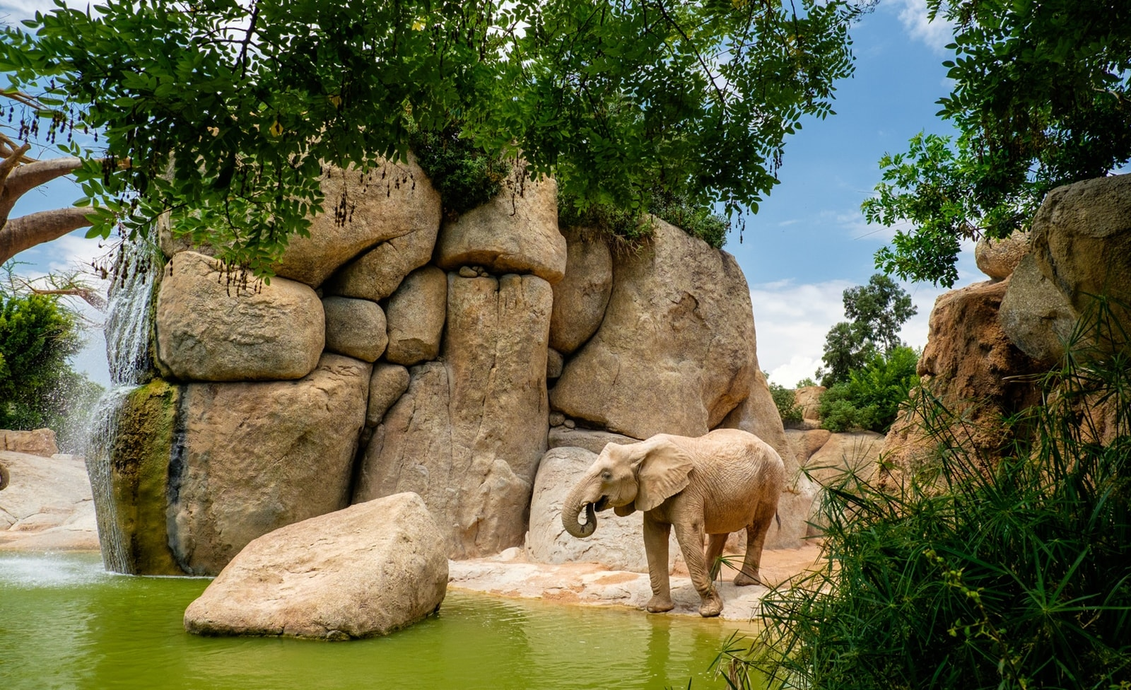 Zoo von Valencia