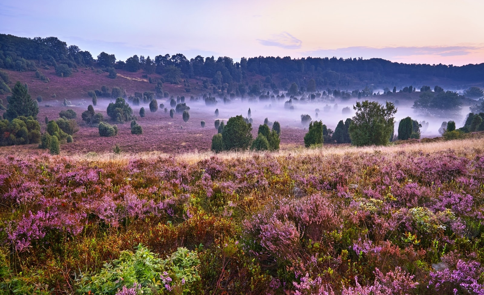 Heide Landschaft in Niedersachsen