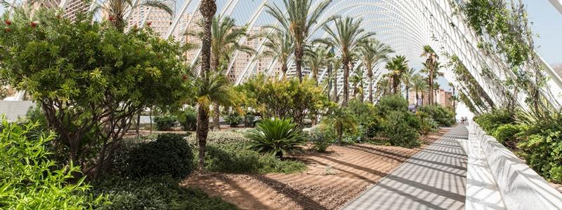 Palmgarten in der Wissenschaftsstadt Valencia