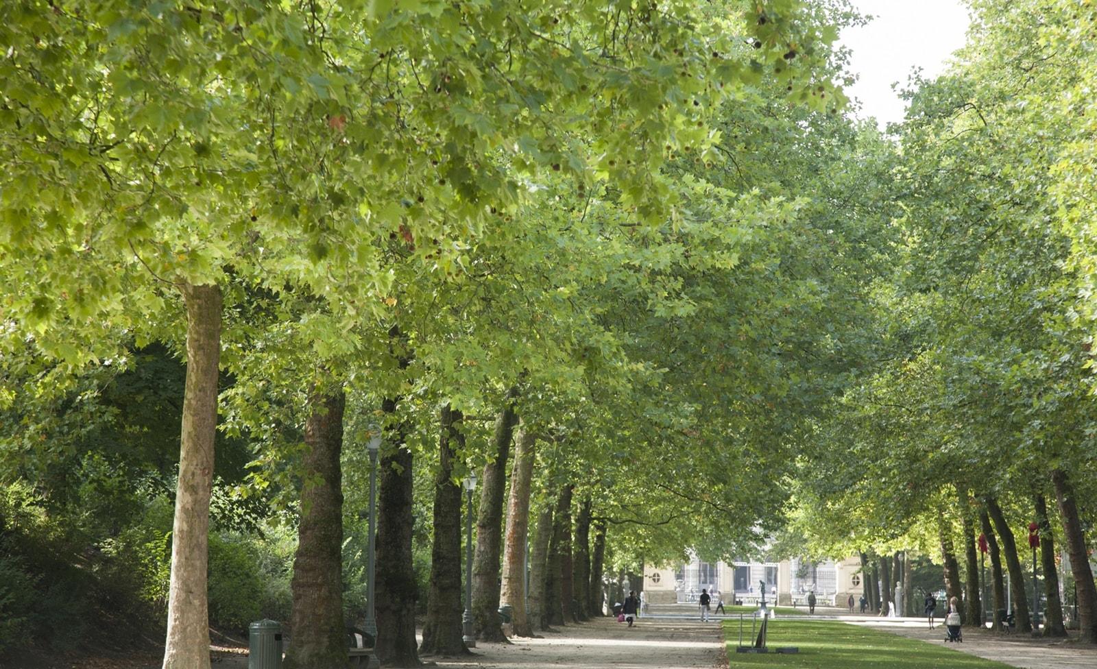 Königlicher Park in Brüssel