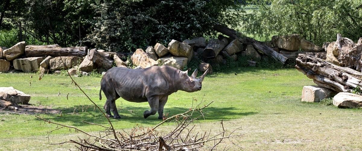tierpark deutschland karte Zoos in Deutschland: Die 10 schönsten Tierparks (mit Karte)