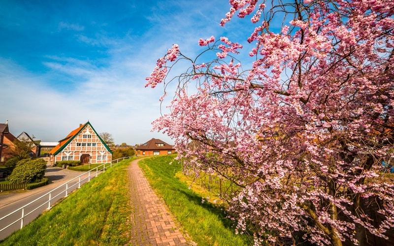 Blühender Obstbaum im Frühjahr