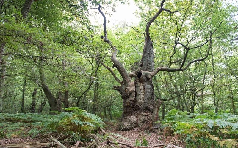 Naturschutzgebiet Vilm