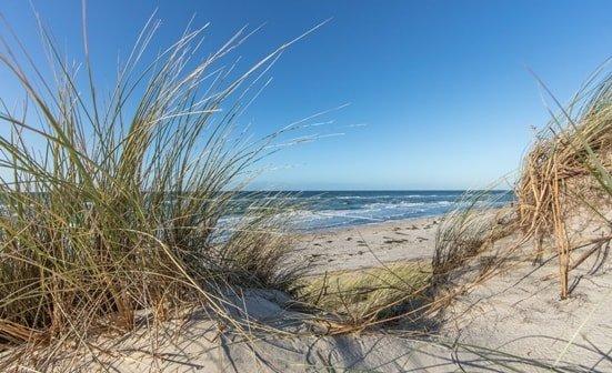 Dünengras und Strand an der Nordsee
