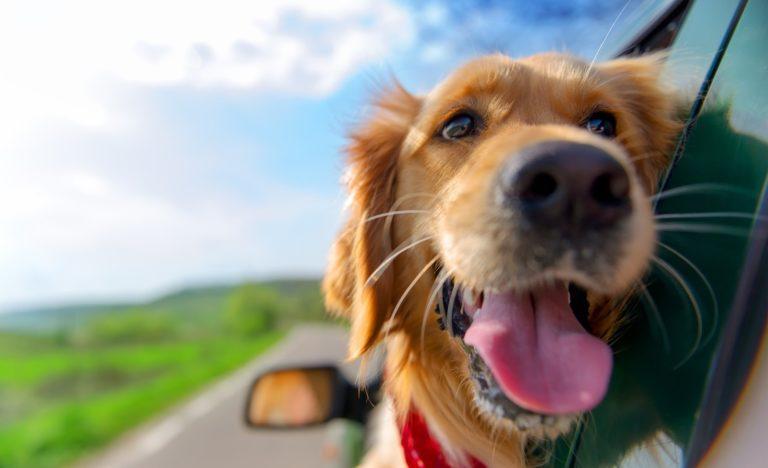 Urlaub mit Hund Tipps