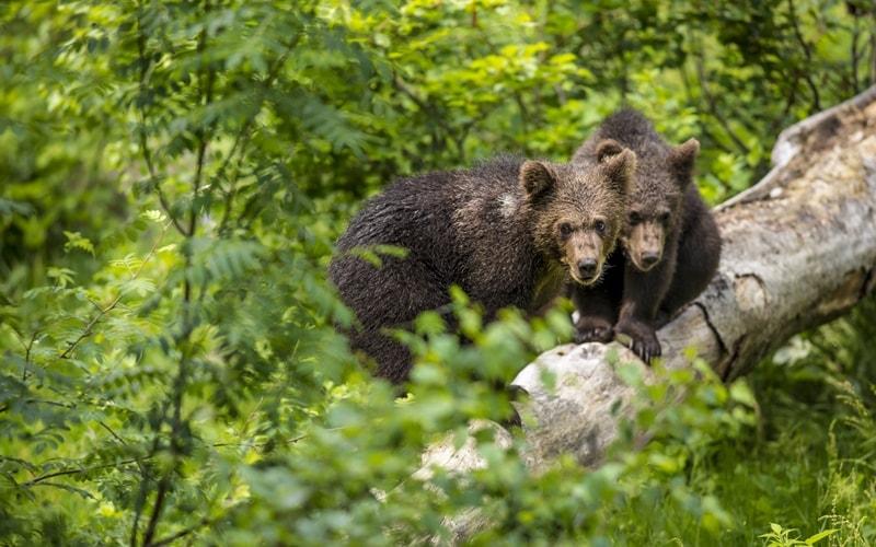 Wildparks in Bayern