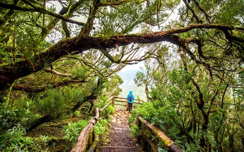 Die bewachsenen Wanderwege im Garajonay Nationalpark.