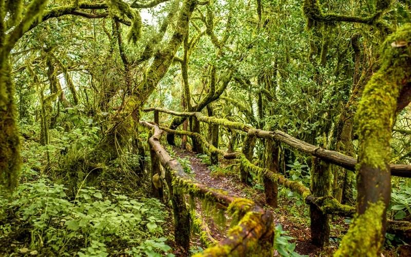 La Gomera Nationalpark Garajonay