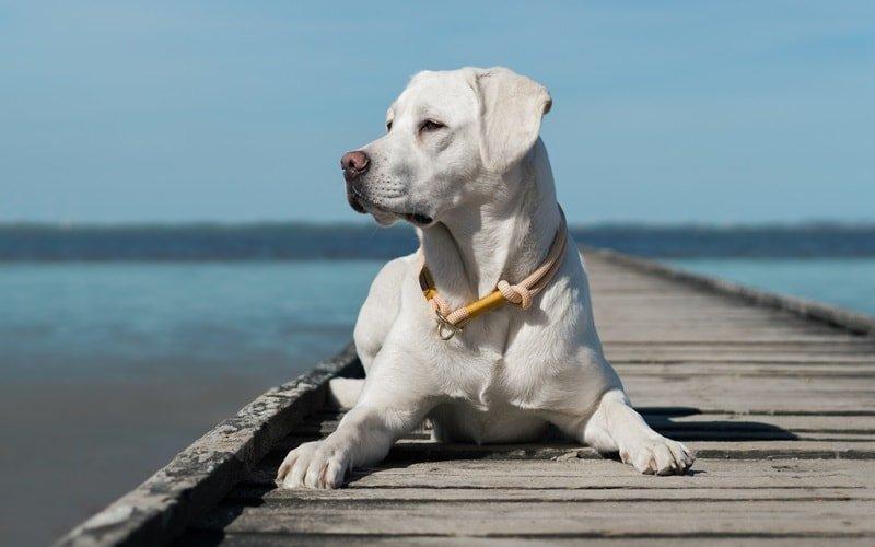 Besimmungen für Hunde