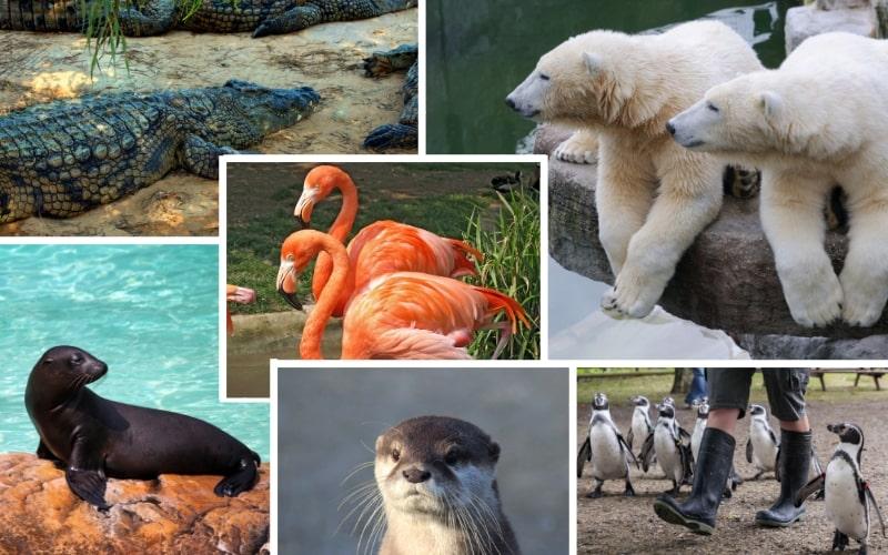 Aqua Zoo Leeuwarden