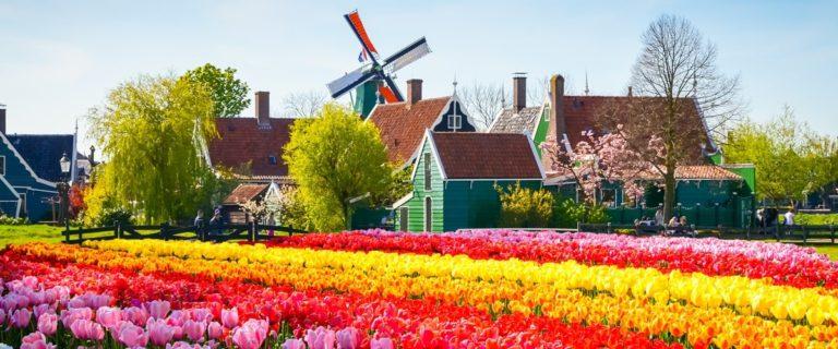 Tulpenblüte Holland Beitragsbild