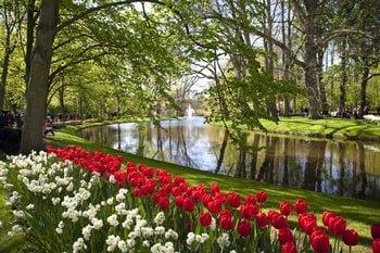 Tulpenblüte Holland Flusskreuzfahrt