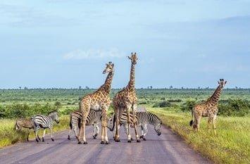 Urlaub Südafrika Februar