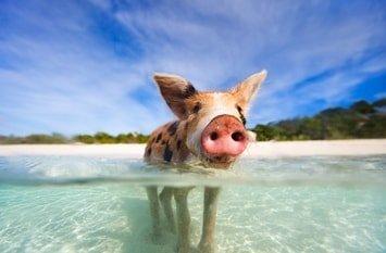 Urlaubsziel Bahamas März