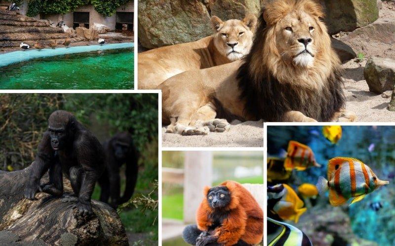 Zoo Artis