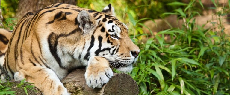 Zoo Holland Beitragsbild