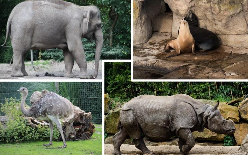 Zoo Rotterdam