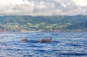 Azoren Wale Mai
