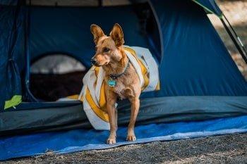 Hundestrand Holland Camping