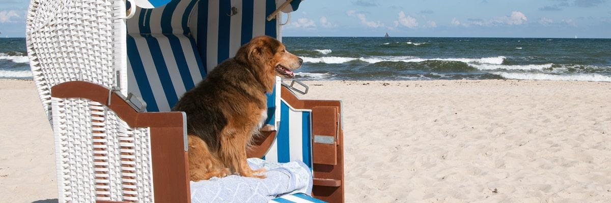 Hundestrand Holland Das solltest du beachten