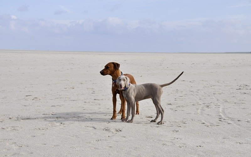 Hundestrand Holland Egmond aan Zee