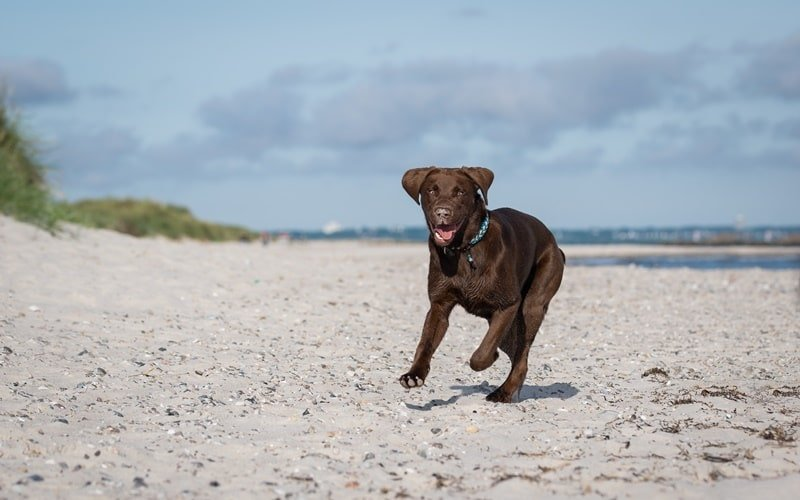 Hundestrände Holland