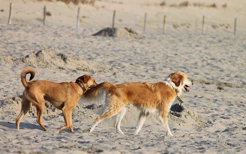 Hundestrand Holland Scheveningen
