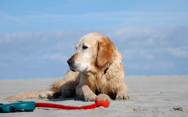 Hundestrand Holland Texel