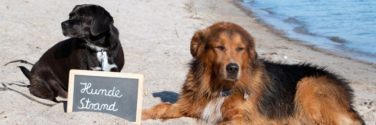 Hundestrand Holland Urlaub direkt am Meer