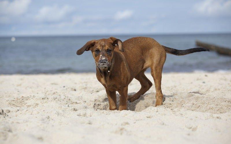 Hundestrand Holland Wassenaar