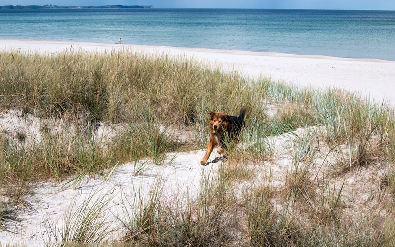 Hundestrand Holland Weitere Strände
