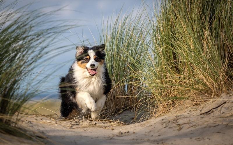 Hundestrand Holland Zeeland