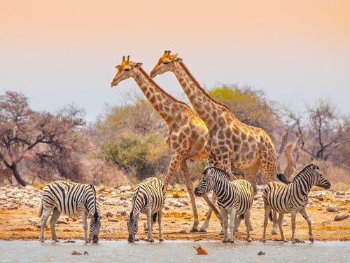 Safari Namibia Oktober