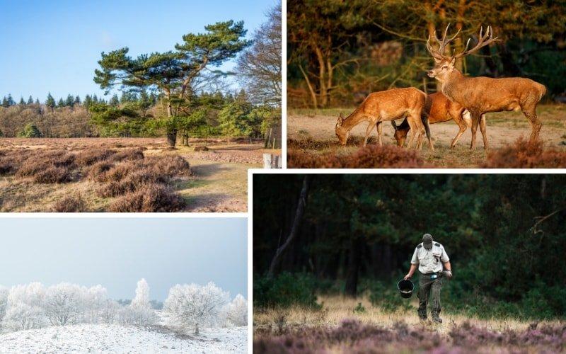 Safaripark Holland Hoge Veluwe