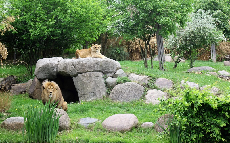 Zoo Sehenswürdigkeiten Leipzig Löwen