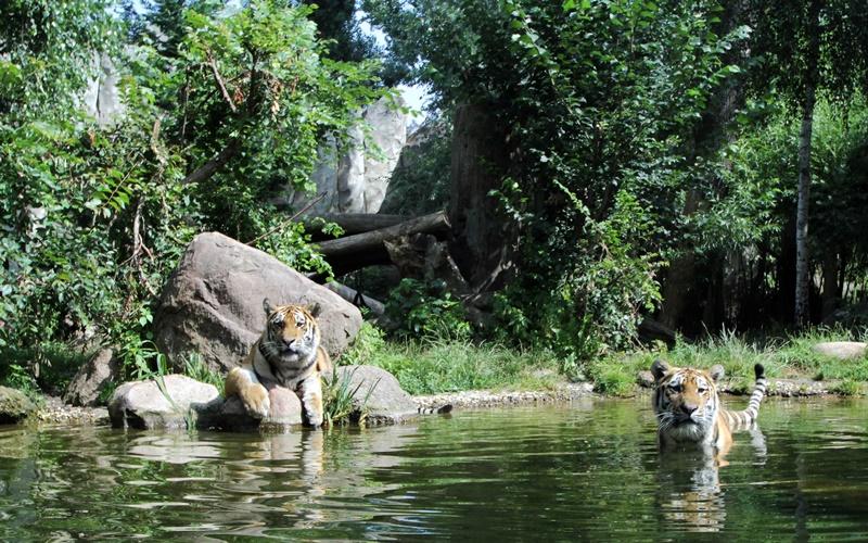 Zoo Leipzig Sehenswürdigkeiten Tiger