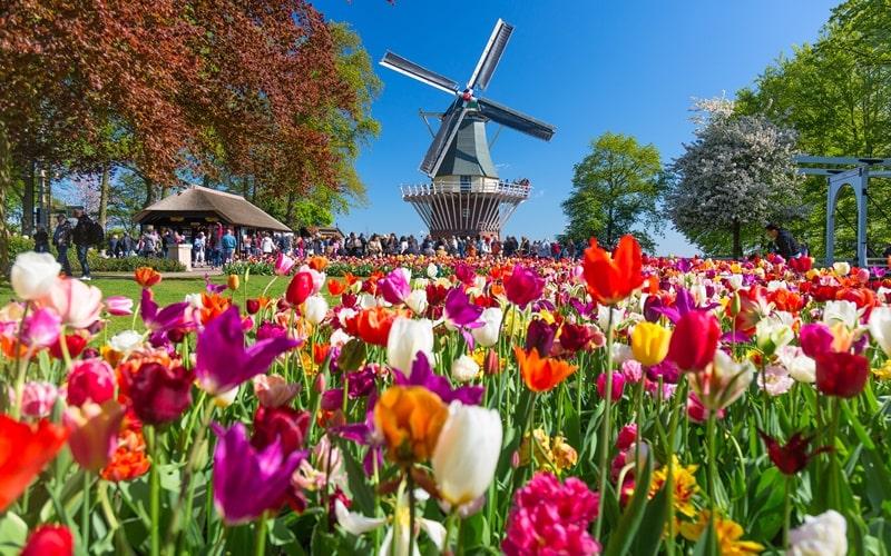 Feiertage Holland Tulpenblüte