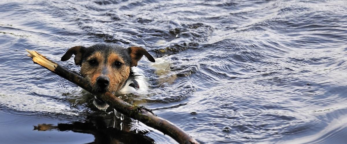 Gardasee Urlaub mit Hund