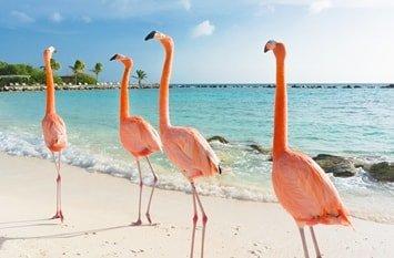 Badeurlaub August Karibik