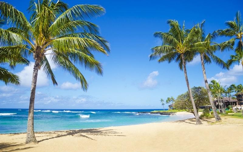 Hawaii Stand