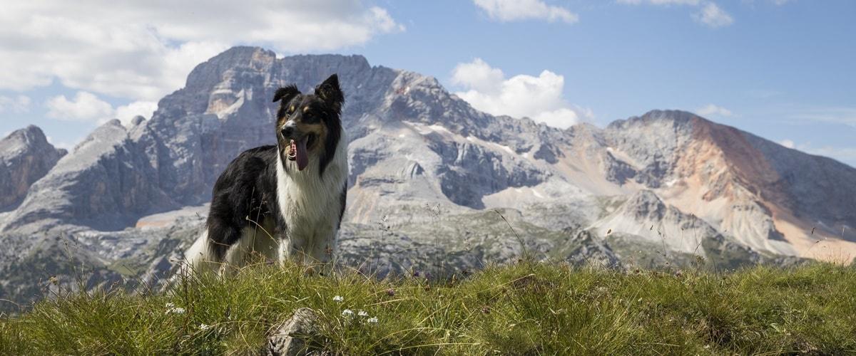 Südtirol Urlaub mit Hund