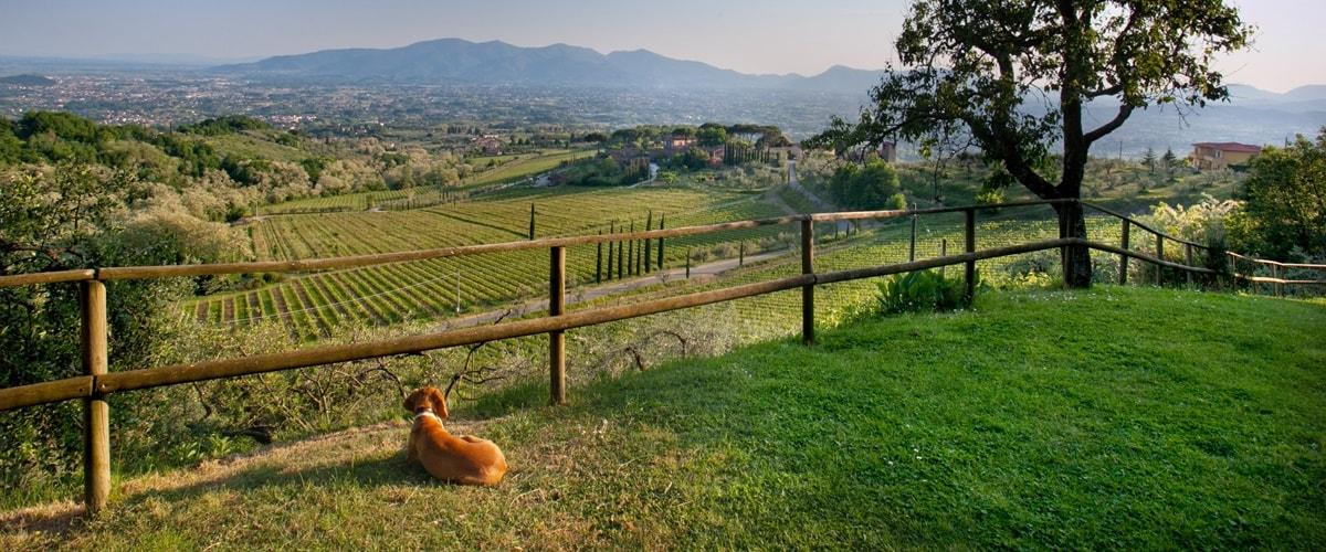 Toskana Urlaub mit Hund