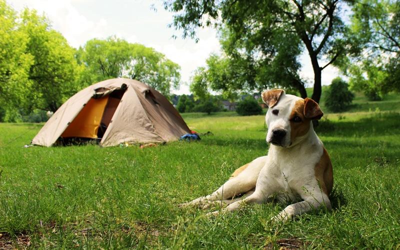 camping österreich mit hund