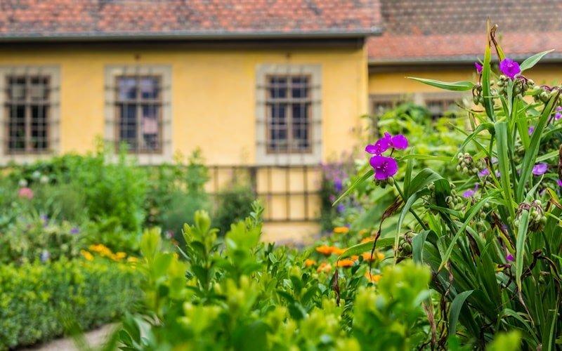 Goethe Hausgarten