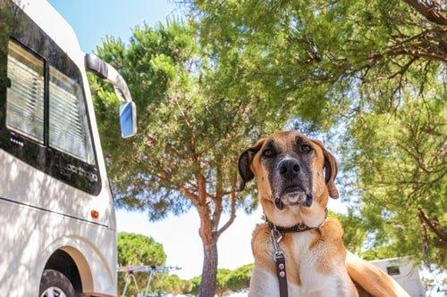 Kroatien Camping mit Hund