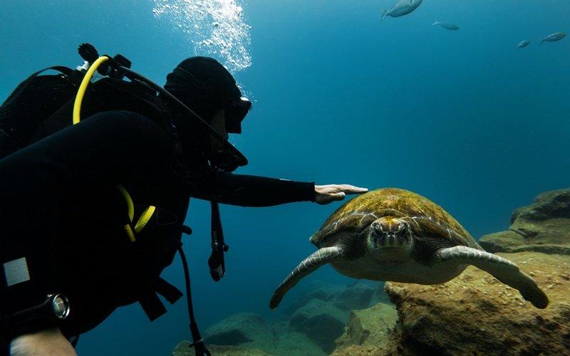schildkröte zakynthos sehenswürdigkeiten