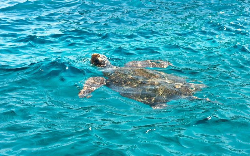 zakynthos attraktion caretta caretta